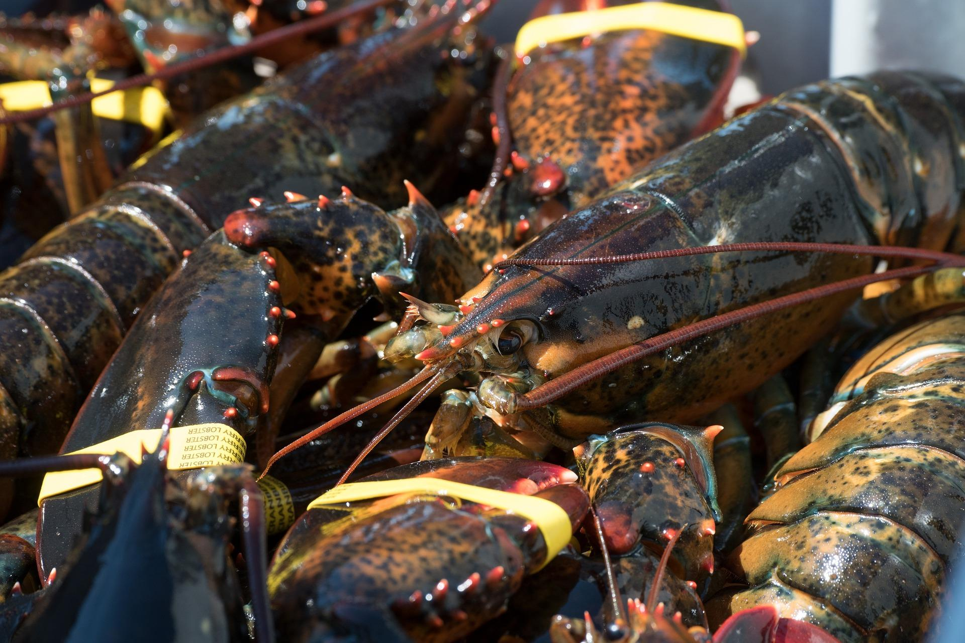 Lobster Excursions